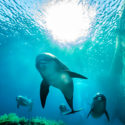 Dolphins and Whales Songs