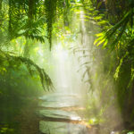 Tropical Rainforest Evening and the Flowing Stream
